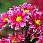 El desarrollo floral, de los frutos a las flores